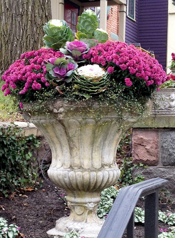 concrete urn with bright pink mums and flowering kale in front of purple house