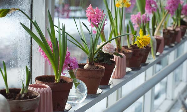 potted pink hyacinths and yellow daffodils blooming on a windowsill