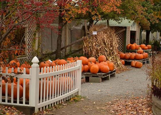 white vinyl accent fence surrounding pumpkins on a pallet