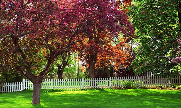 white picket fence in back yard with flowering trees an green grass