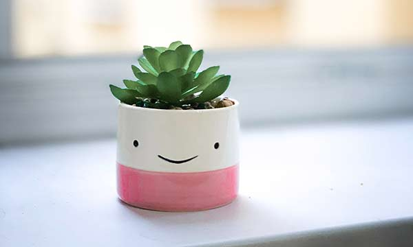 green succulent plant in pink-and-white pot with a smiley face