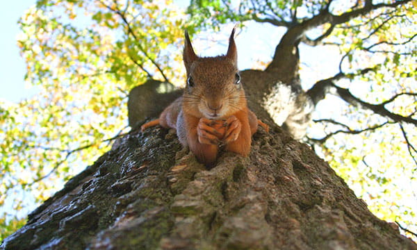 squirrel staring down tree trunk