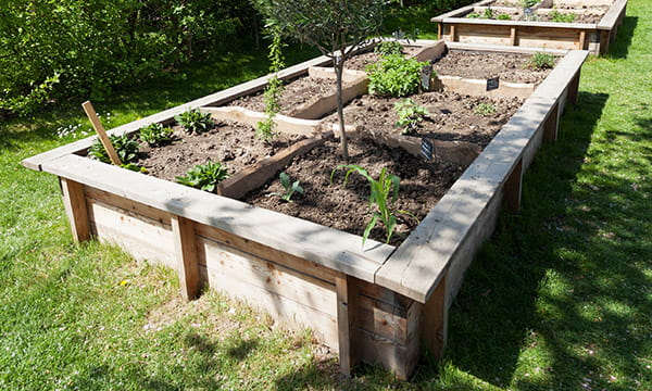 wood raised garden bed with ledge
