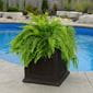 bright, green, leafy plant planted in the espresso-colored ferndale square planter box. swimming pool in the background.